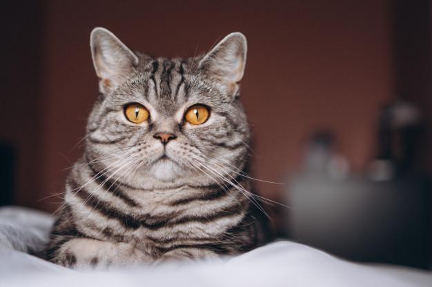 รูปแมวอ้วนและขนมแมวเลีย